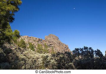 Gran Canaria, the highest areas of the island, Las Cumbres,...