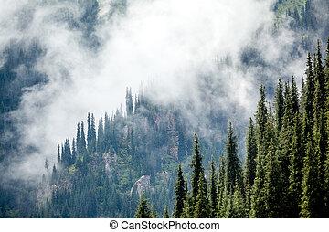 gran, höjande, dimma, träd