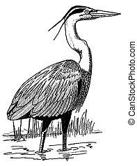 gran heron azul
