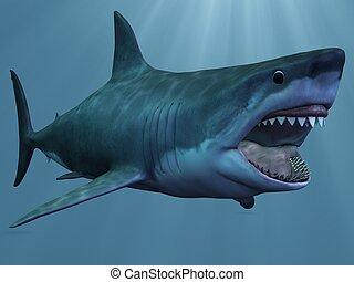 Squalo clipart e archivi di for Disegno squalo bianco