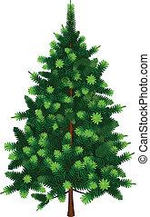 gran, vektor, träd