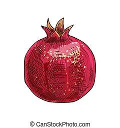 granaatappel, vrijstaand, rood fruit, verboden, schets