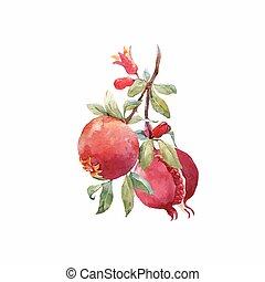granada, fruta, vector, rama