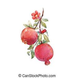 granada, vector, rama, fruta