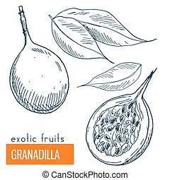 Granadilla. Hand drawn vector illustration