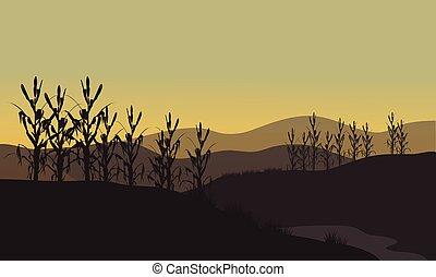 granaglie, silhouette, a, tramonto