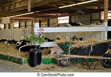 granaio, vecchio, lattina, mucca, latte