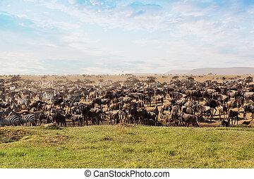 grand, africaine, groupe, safari, animals.