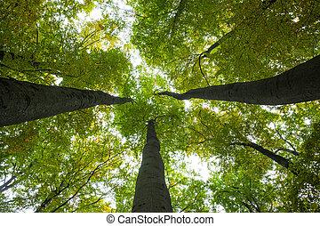 grand, angle, bas, arbres, vue