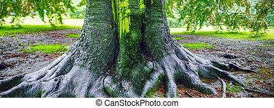 grand, après, arbre chêne, pluie
