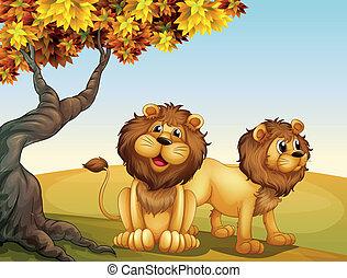 grand arbre, deux, lions