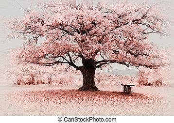 grand arbre, infrarouge