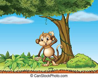 grand arbre, singe, sous