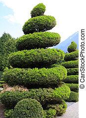 grand, arbre vert, topiary