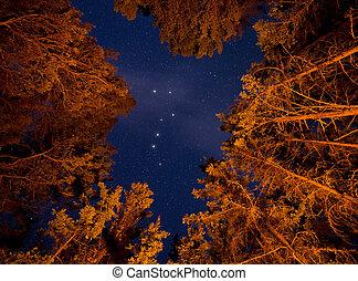 grand, arbres, lit, visible, louche, par, orange