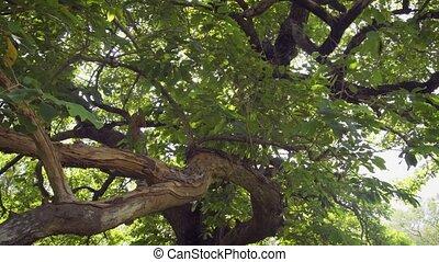 grand, branches, couronne, exotique, vue, arbre., grand