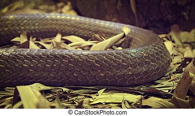 grand, brun, closeup, peau serpent