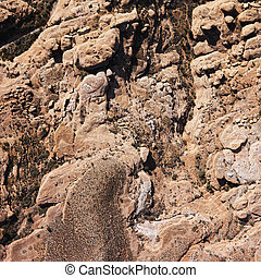 Grand Canyon area.