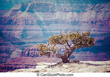 Grand Canyon National Park, Arizoan, USA