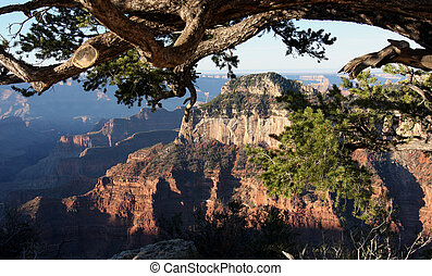 Grand Canyon North Rim View - A view of Grand Canyon from...