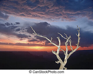 Grand Canyon Sunset Snag