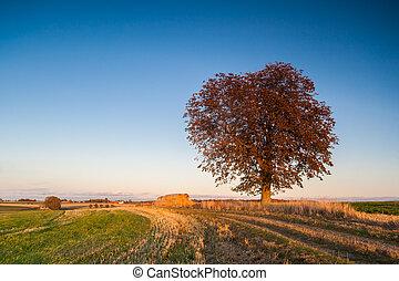 grand, champ, arbre