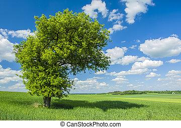 grand, champ, arbre, ombre, sous