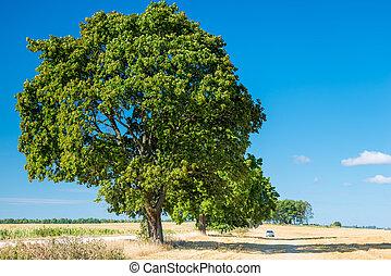 grand, champ, enduisage, arbre, croissant