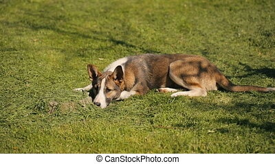 grand, chien, haut, dormir, sillage, que
