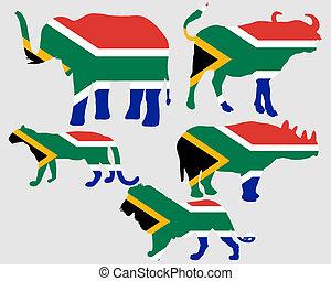 grand, cinq, afrique sud