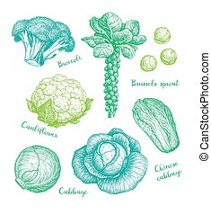 grand, collection, cabbage.