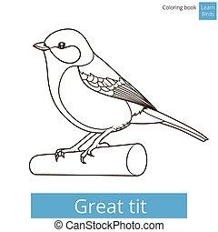 grand, coloration, mésange, oiseaux, vecteur, apprendre, livre