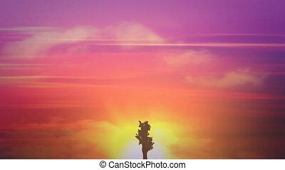 grand, croissance, arbre, levers de soleil