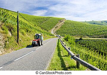 grand cru vineyard, C�te Rotie, Rh�ne-Alpes, France