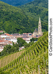 grand cru vineyard, Thann, Alsace, France