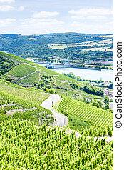 grand cru vineyards near Ampuis, Cote Rotie, Rhone-Alpes,...