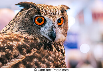 Grand duke owl with orange eyes against blurred background