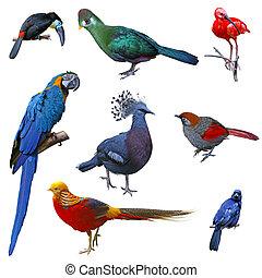 grand, ensemble, oiseau
