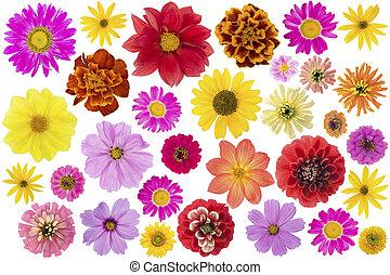 grand, fleurs, ensemble, isolé