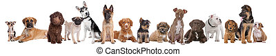 grand groupe, de, chiots