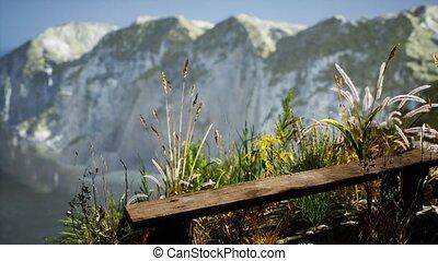 grand, herbe, rocheux, océan, falaise, frais