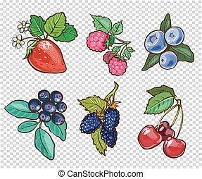 grand, illustration, main, berries., vecteur, collection, dessiné