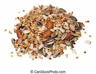grand, mélange, graine, parakeets