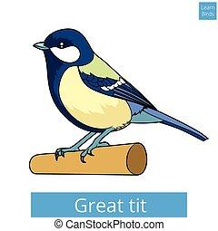 grand, mésange, pédagogique, jeu, vecteur, apprendre, oiseaux