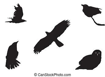 grand, oiseaux