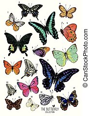 grand, papillons, collection