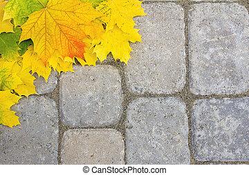 grand, paver, feuilles, patio, érable