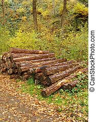 grand, pile, journaux bord, forêt