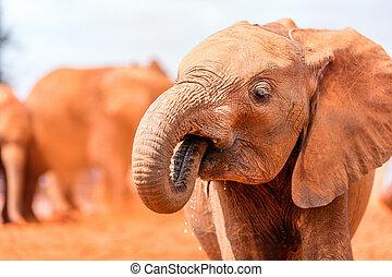 grand plan, éléphant