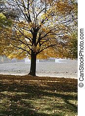 grand plan, sur, a, arbre, dans, les, automne